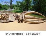 Fossil in Toronto, Canada - stock photo