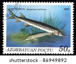 Small photo of AZERBAIJAN - CIRCA 1993: A stamp printed in Azerbaijan shows Acipenser stellatus, circa 1993