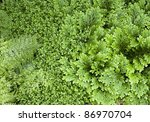 natural full frame background including exotic filigree leaves - stock photo
