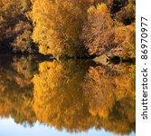 serene landscape of the birch... | Shutterstock . vector #86970977