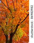 Beautiful Fall Scenery In...