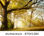 A Huge Old Oak Tree In Autumn...