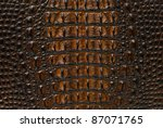 Gold Freshwater crocodile bone skin texture background. - stock photo