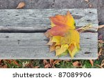Autumn Maple Leafs Over Bench