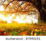 big autumn oak and green grass...   Shutterstock . vector #87090251