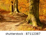 beech forest with trail | Shutterstock . vector #87112387