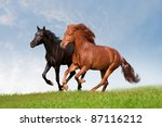 Two Horses In Summer Field
