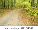 path through beech forest - stock photo