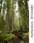 Majestic Redwoods  One Fallen...