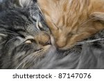 Stock photo portrait of two red and grey kittens snuggling together 87147076
