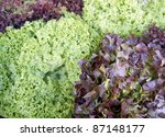 full frame background with red and green lettuce leaves - stock photo
