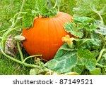 Pumpkin In Field Within Green...