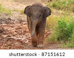 Stock photo baby thai elephant 87151612