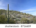 Постер, плакат: Saguaro cacti over a