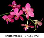 Phalaenopsis Red Hot Imperial '...