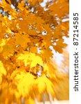 autumn leaves background....   Shutterstock . vector #87214585