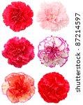A Set Of Six Carnation Flowers