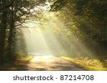 Stock photo lane running through the autumn deciduous forest at dawn 87214708