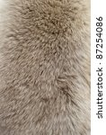 close up of an animal colored...   Shutterstock . vector #87254086