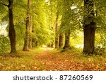 alley in a autumn forest. | Shutterstock . vector #87260569