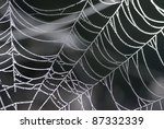 Spider Web With Shiny Drops Of...
