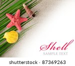 The sea shell as a background. Close-up - stock photo