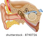 human ear | Shutterstock .eps vector #8740726