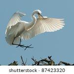 The Great Egret Landing