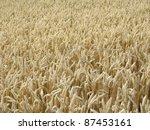 full frame detail of a wheat... | Shutterstock . vector #87453161