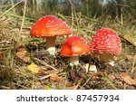 Red Toad Stools Actual Name  ...