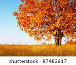 Big Autumn Oak Tree With Red...