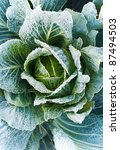 cabbage from top view. frozen... | Shutterstock . vector #87494503