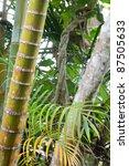 Tropical Pristine Rain Forest...