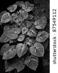 Foliage in Black and White (vertical) - stock photo