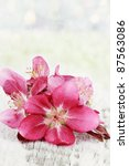 Apple blossoms on a rustic background with copy space. - stock photo
