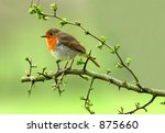 A Robin Sitting On A Branch Of...