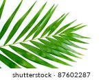 beautiful palm leaf isolated on ... | Shutterstock . vector #87602287