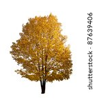 Colorful Autumn Tree Isolated...