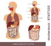 digestive system  detailed... | Shutterstock . vector #87657103