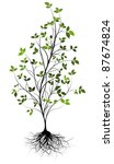 young tree and root - stock vector