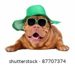 Dog Wearing Green Straw Hat And ...