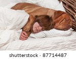 Girl And Her Dog Comfortably...