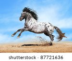 Horse Appaloosa Color Play On...