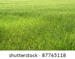 abstract green grassland scenery in sunny ambiance - stock photo