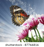 Stock photo butterfly on a flower 87766816