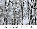 forest detail with lots of snow and twigs at evening time - stock photo