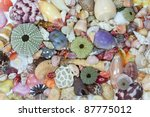 Sea Shells Collected On The...