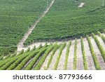 rows of vines | Shutterstock . vector #87793666