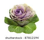 Closeup Of Ornamental Kale On ...