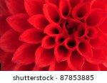 Macro Shot Of A Dahlia Flower